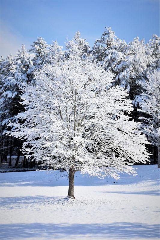 snow-1966934_1280.jpg